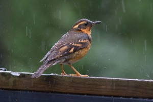 small bird in rain